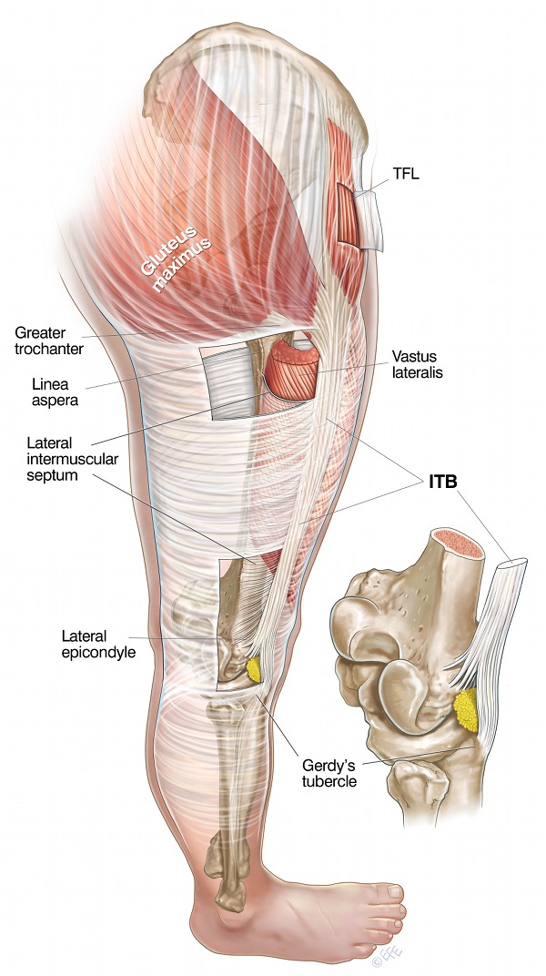 IT Band Anatomy is the key to understanding the cause of IT band syndrome
