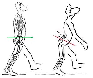 Pelvic Tilt Back Pain
