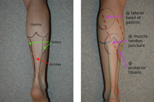 Achilles Tendon and Lower Leg Anatomy
